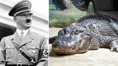 صورة شاهد: عرض تمساح هتلر في متحف موسكو