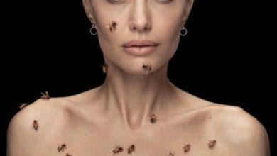 صورة انجلينا جولي تروي تفاصيل مؤثرة عن لقطة اجتياح خلية النحل لجسدها